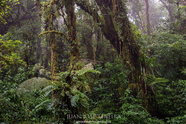 Bosque nuboso de Monte Verde