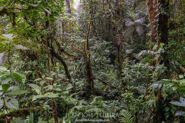 Bosque nuboso de Monte Verde.