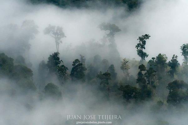 El bosque húmedo...