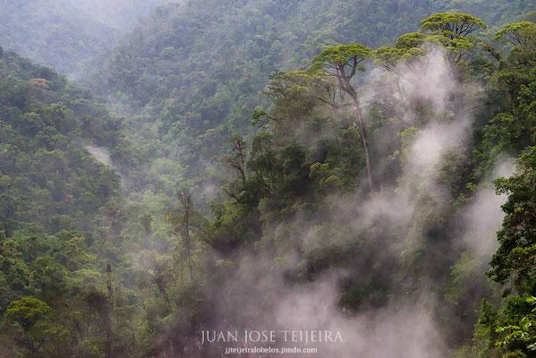 Nieblas en el parque nacional Juan Castro Blanco, Alajuela.