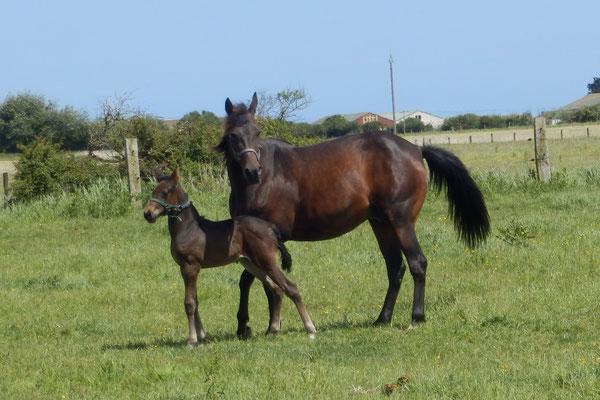 Daventry und Zebou