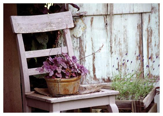 rosa Stuhl mit Pflanze Nr. 35