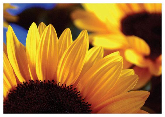 Sonnenblumen Nr. 109