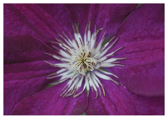 offene Blüte Nr. 89