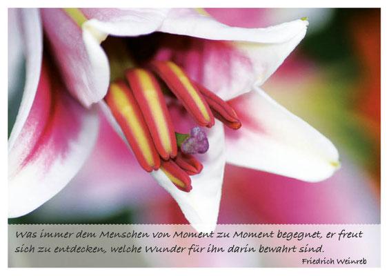 Lilienblüte - Wunder in den Begegnungen entdecken  Nr. 165