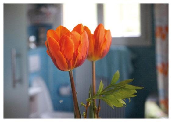 gespiegelte Tulpe Nr. 64