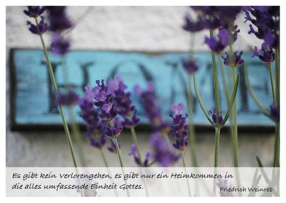 Lavendel Home - Heimkommen in die umfassende Einheit Gottes Nr. 154