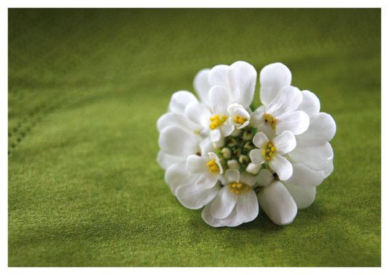 weisse Blüte auf grüner Serviette Nr. 32