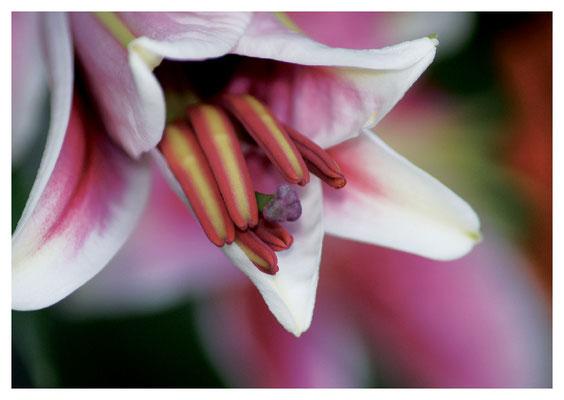 Lilienblüte mit Stempel Nr. 78