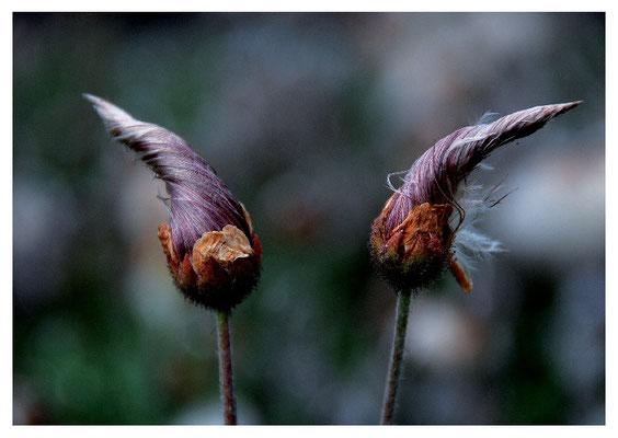 Zipfelmützen-Blumen Nr. 103