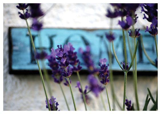 "Lavendel mit ""Home"" Nr. 13"