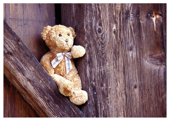 Teddybär Nr. 15