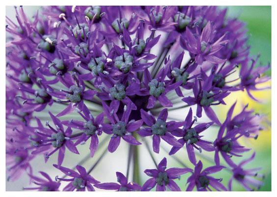 violette Kugel Nr. 70