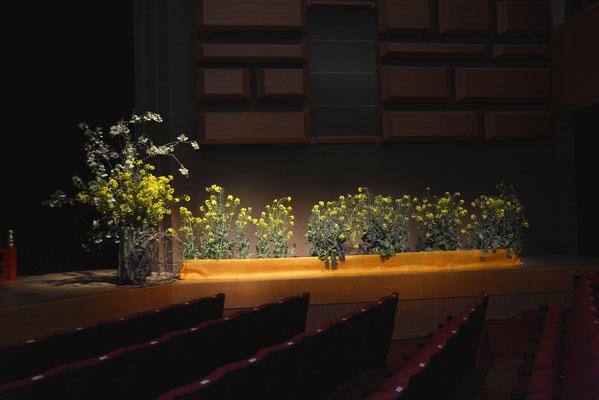 舞台の菜の花
