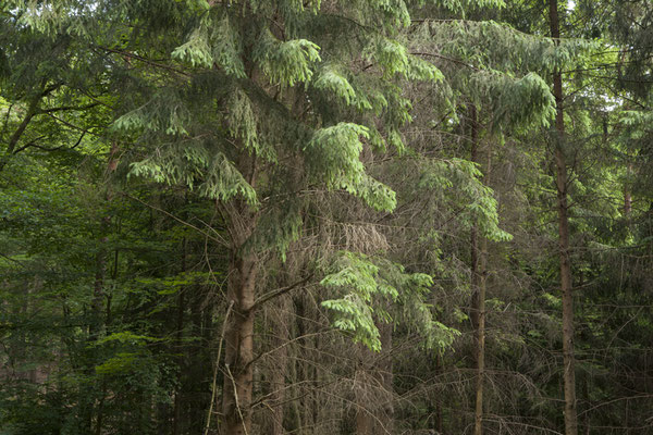 ©ellen_bornkessel_forest