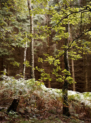 WALD - FOREST