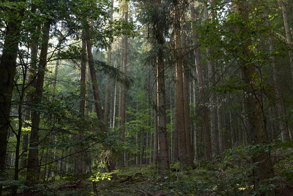 wald©ellen_bornkessel_forest
