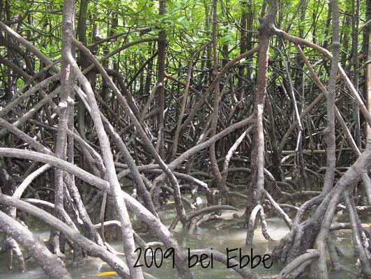 Mangroven bei Ebbe Thailand