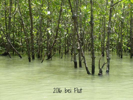 Mangroven bei Flut Thailand