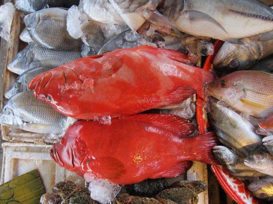 Bang Niang Market Fisch
