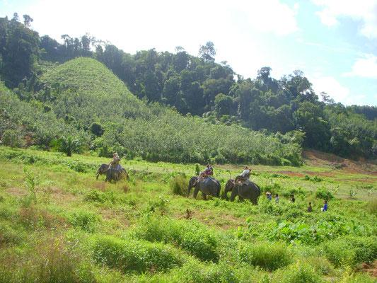 Elefantenreiten Khao Sok Nationalpark