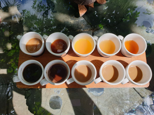 Bali Pulina Kaffee Tasting