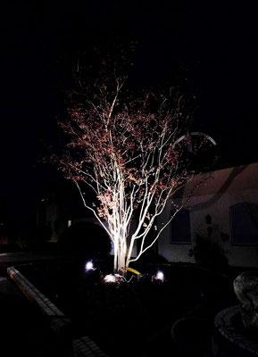 Die schöne Silhouette des Baums wird betont.