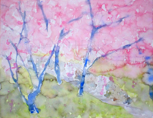 31.8×41.0cm water color 「cherry blossoms」