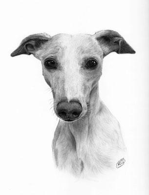 Auftragszeichnung Windhund