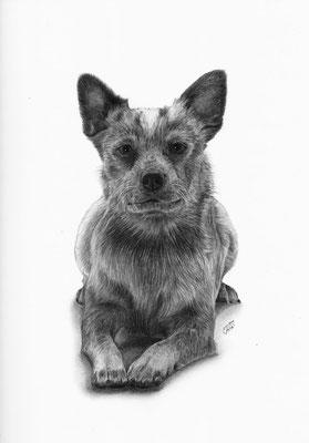 """Auftragszeichnung Hund """"Suki"""""""