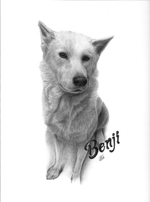 Auftragszeichnung Hund Benji