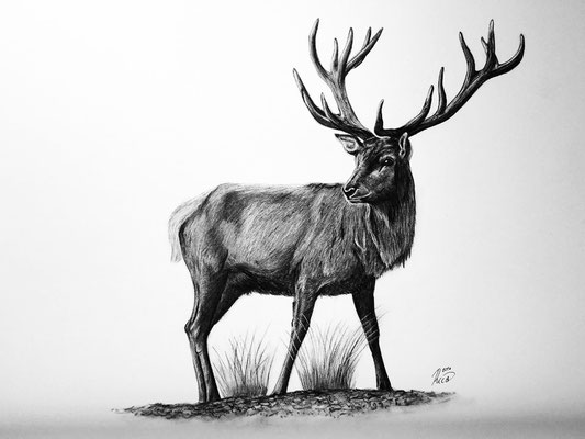 Zeichnung Hirsch