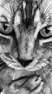 """Zeichnung """"Katze"""" Detailaufnahme"""
