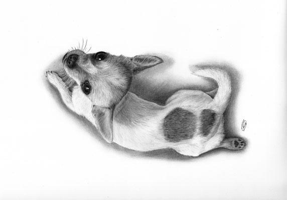 """Zeichnung meines Hundes """"Kira"""""""