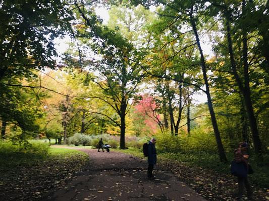 C'est l'automne et les couleurs sont magnifiques... Difficiles à rendre en photos !