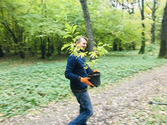 Alexandre apporte le premier jeune plant !