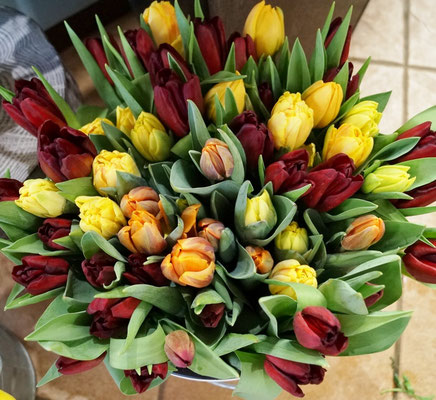 Tulpen aus eignener Produktion