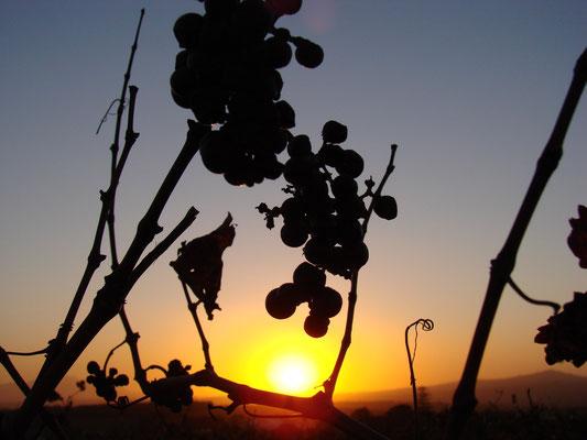 Sunset in der Vinery Eikendal