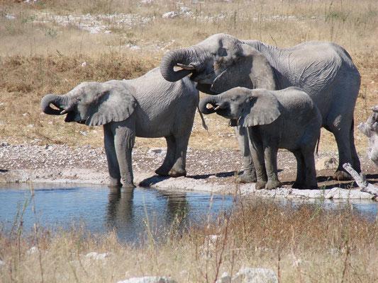Ein 10minütiges Wasserbad am Wasserloch und dann waren die Elefanten wieder weg