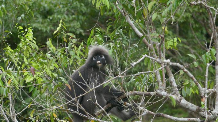 """Diese niedlichen Affen waren doch viel """"freundlicher"""""""