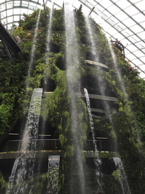 Im Cloud Forest in Singapur