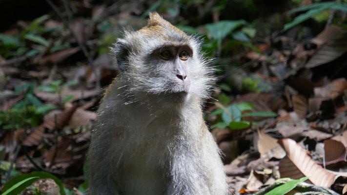 Die frechen Affen gab es überall auf der Insel, auch auf unserer Terrasse...