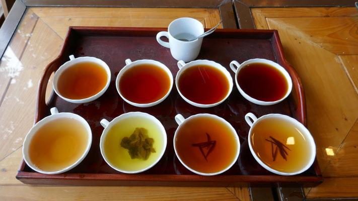 Tee-Degustation auf einer Tee-Plantage