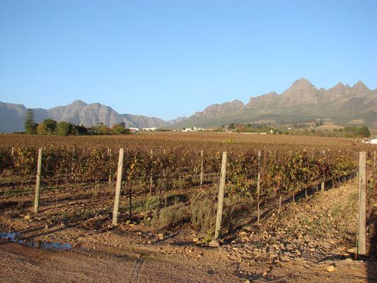 Im Weingebiet Stellenbosch