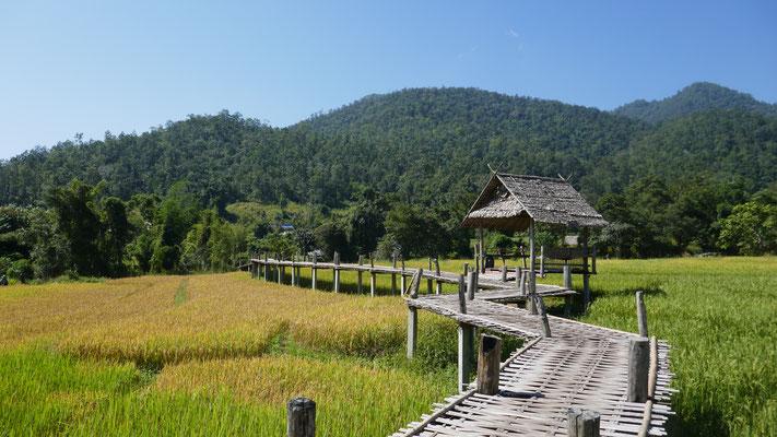 Spaziergang auf den Bamboo-Brücken