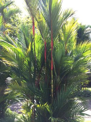 Unterwegs im schönen Botanischen Garten von Singapur