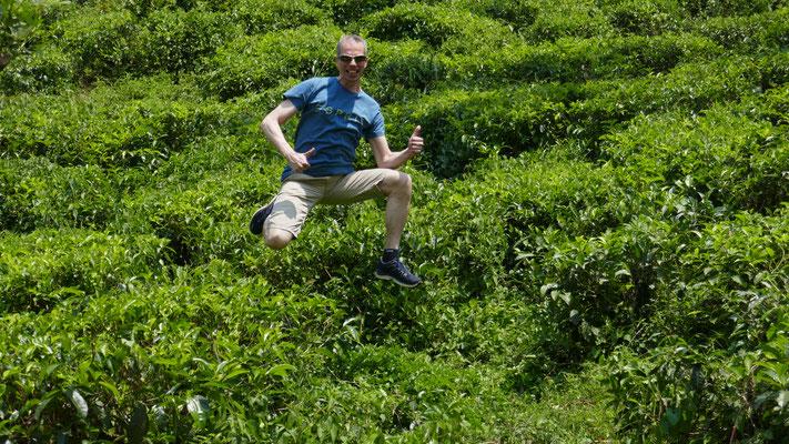 In den Teeplantagen im Gebirge von Ella, Sri Lanka, März 2018