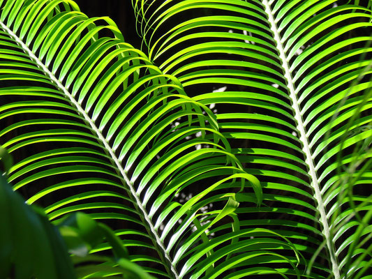 Im botanischen Garten Kirstenbosch bei Kapstadt