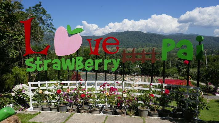 Hier gibts alles mit Erdbeeren