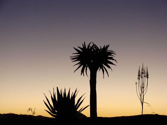 Sonnenuntergang am Brandberg